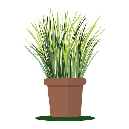 plant pot: illustration plant in pot. Grass