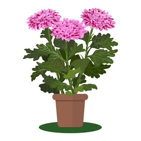 bloomy: illustration plant in pot. Blooming flower
