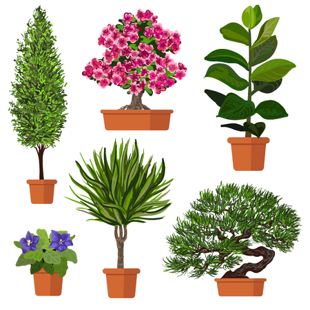 azalea: Illustration of plants in pot.