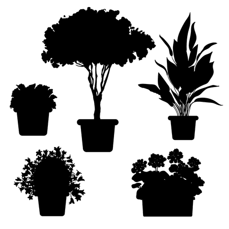 azalea: set of silhouette plants and flowers in pot. Black and white illustration of plants Illustration