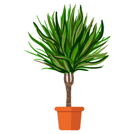 plant pot: illustration plant in pot. Palm tree