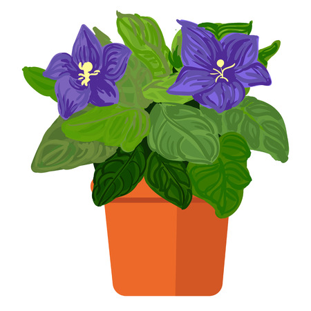 plant pot: illustration plant in pot. Violet