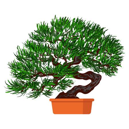 dwarf: illustration plant in pot. Bonsai dwarf tree.