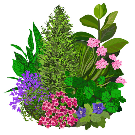 flower bed: Garden landscapes, summer and spring flower bed. Vector illustrations