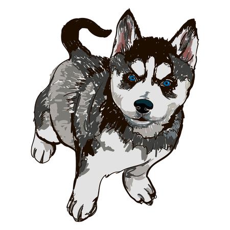 犬の品種品種ハスキーのイラスト