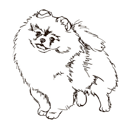 Ilustración de la raza de perro Pomerania Ilustración de vector