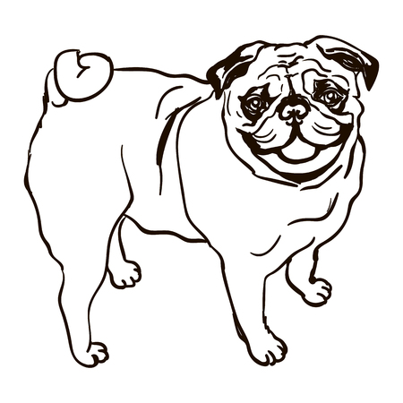 Illustration of dog breed Pug