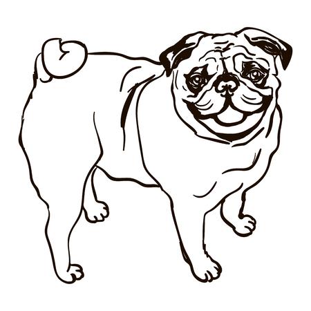 Illustration der Hunderasse Mops