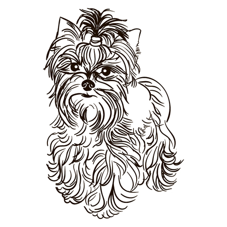 Illustration of dog breed Yorkshire Terrier Illustration