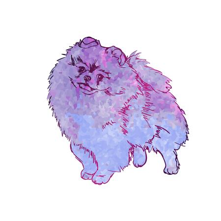 Vector colorful illustration of dog breed Pomeranian Spitz, isolated on white background, animal, art, artwork, breed. Blue dog