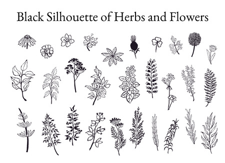 Vector black and white illustration set of herbs, plants and flowers. Hand drawn graphic sketches for you design