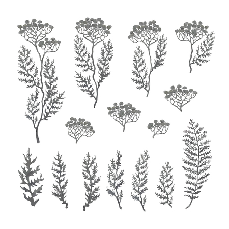 Vector grayscale illustration set of herbs, plants and flowers. Hand drawn graphic sketches for you design
