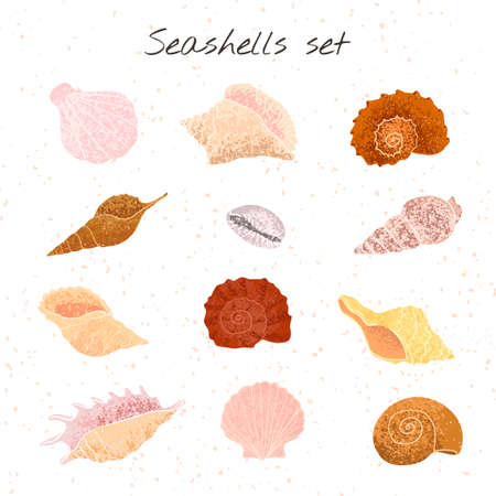 Vector colorful set with hand drawn illustrations of seashells isolated on white background. Elemets for your designs for greeting card, poster, packaging paper, t-shirts print, card