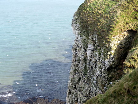 Bempton Bird Sanctuary East Yorkshire UK