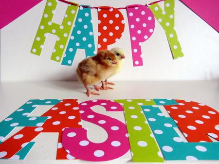pollitos: Feliz Cumpleaños