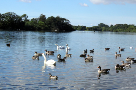 mere: Rural View of the mere at Hornse, East Yorkshire, UK Stock Photo