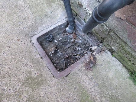 Outside drain, blocked by leaves and rubbish