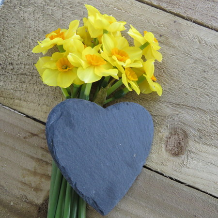 blank slate: Bunch of yellow and orange daffodils with blank slate heart on a wooden background