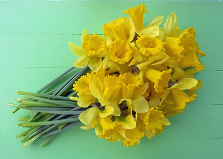 Large bunch of Spring daffodils against a bright green wooden  background. Space for text.