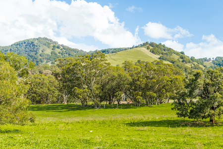 nsw: View of rolling hills in Upper Hunter Valley, NSW, Australia