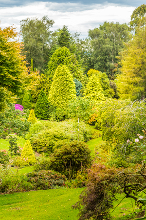 View of trees in a garden, showing a variety of green colors. Stok Fotoğraf