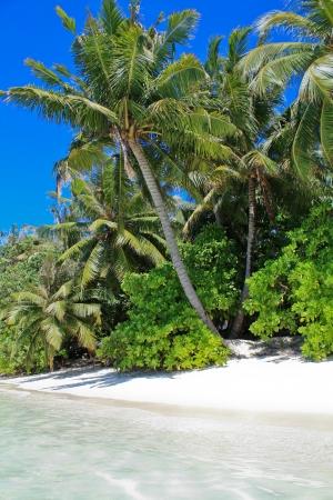 Wild beach of Maldives photo