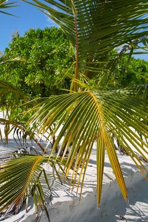 motu: Palm tree in spring Stock Photo