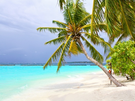Coco palm tree on the white sand beach photo
