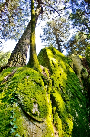 ferns and orchids: Moss-covered forest