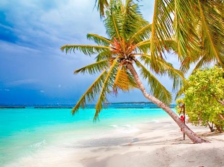 beach palm: Coconut palm beach