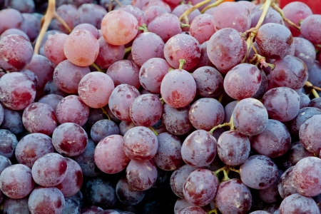 Blue grape background