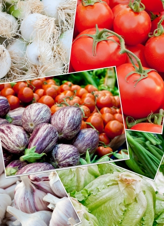 Vegetable collage. Fresh vegetables for haelthy nutrition: Tomatoes, eggplants, onion, green onions, lettuce, garlic,