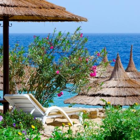 Beautiful beach, flowers sunbed umbrellas on sea background