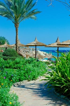 Summer Beautiful beach is buried in verdure and flowers
