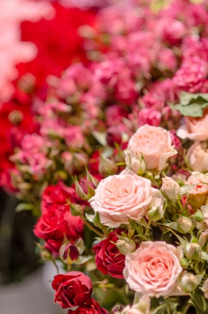 pink roses on red background blur Stock Photo