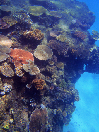 Fish on the Great Barrier Reef, Queensland, Australia Stock Photo