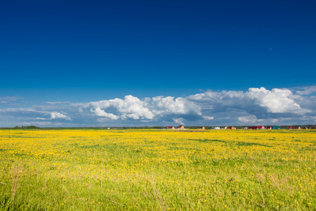 rural landscape: Field of yellow dandelions against the blue sky. Rural landscape.