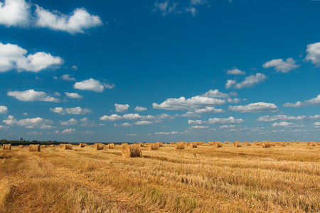 cut grass: The field of cut grass on a background of blue sky.