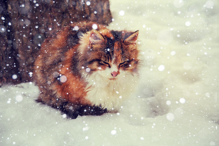 under a tree: Multi-colored cat sitting under a tree in winter. Its snowing. Stock Photo