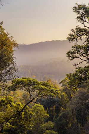 Stunning wild jungle in the highlands, Kerala state, South India.