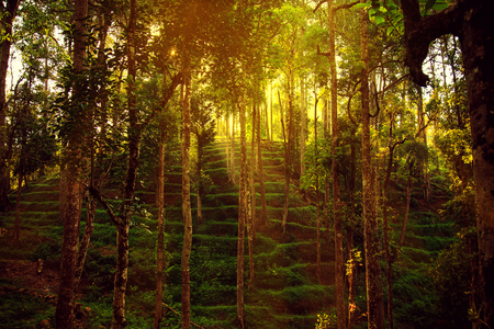 unexplored: Stunning wild jungle in the highlands, Kerala state, South India.