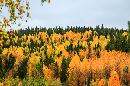 Yellow and green trees in autumn forest, Karelia, Russia. View from above. Stock fotó