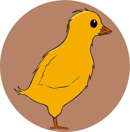baby chicken: Baby Chicken
