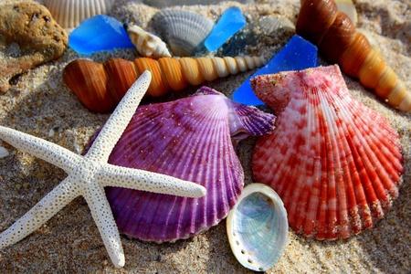 conchas: conchas de colores del mar en la arena Foto de archivo