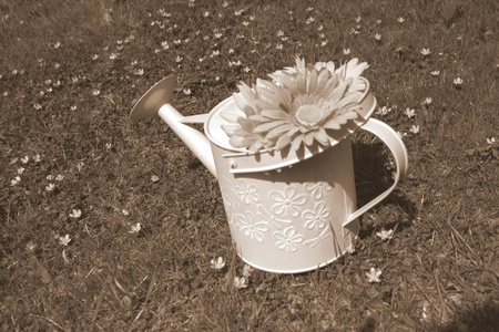 black and white watering can photo