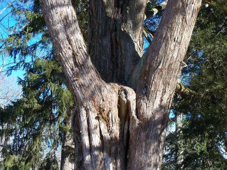 奇妙な木の成長