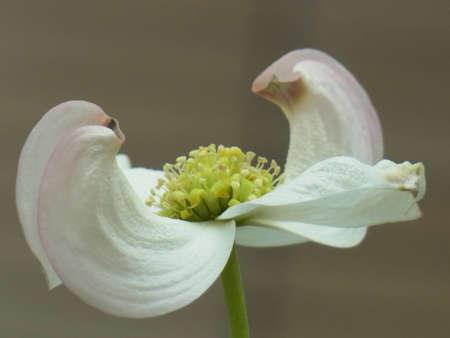 Unknown White Flower In Park, Tokyo, Japan
