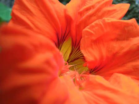 Unkown Orange Flower in Neighbors Garden