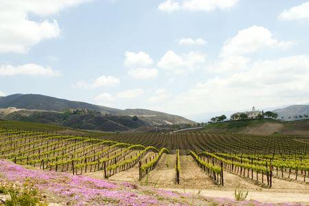 Temecula país del vino  Foto de archivo - 1828609