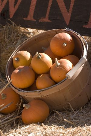 hayride: Pumpkin display at the county fair